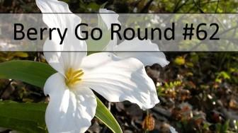 Berry Go Round #62