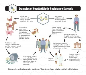 Spread of Antibiotic Resistance