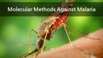 3 Minute Thesis Talk: Molecular Methods Against Malaria