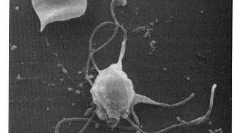The Malaria Thesis, Part 1